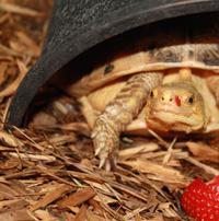 Sheena Koeth, Turtle Survival Center Veterinary Care Manager testimonial