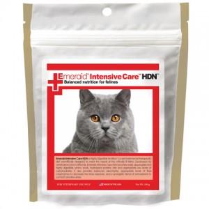 Feline Intensive care