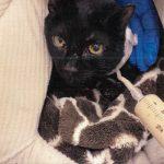 Geraldine rescue cat