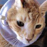 cat with feeding tube